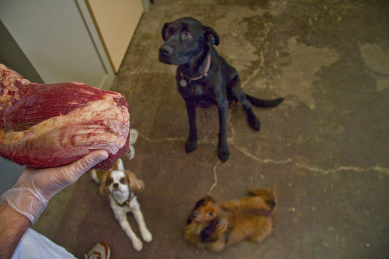 Pack Wants Grassfed Beef!