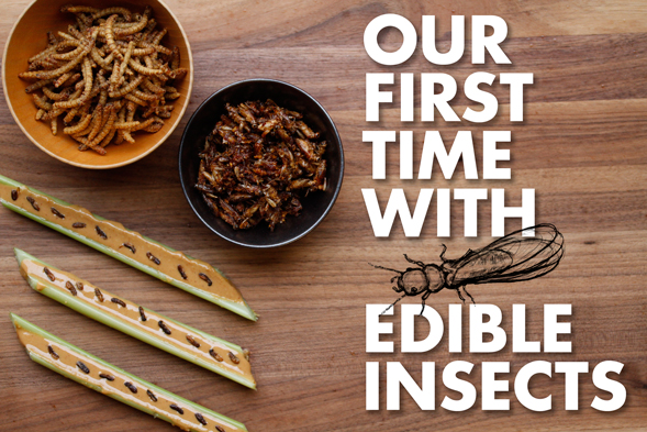 edible insects staff stories